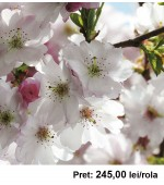 Fototapet floral Komar 8-507 368 x 254 cm