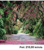 Fototapet peisagistic Komar 8-985 368 x 254 cm